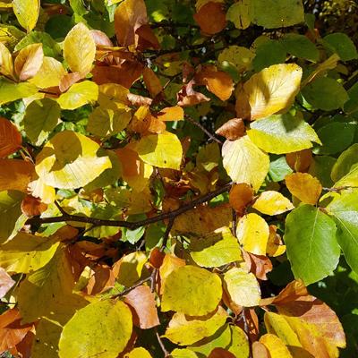 Traufgang-Herbst-Albstadt-wandern